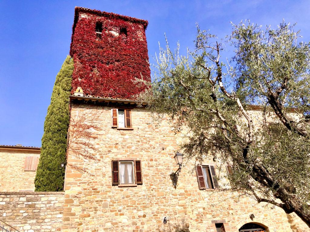 campanile frontino edera rossa
