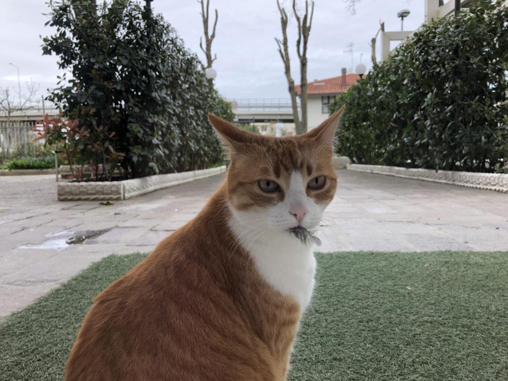 titti gatta rossa